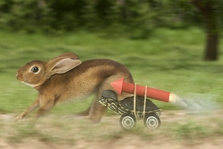 Rabbit and turtle racing theme image