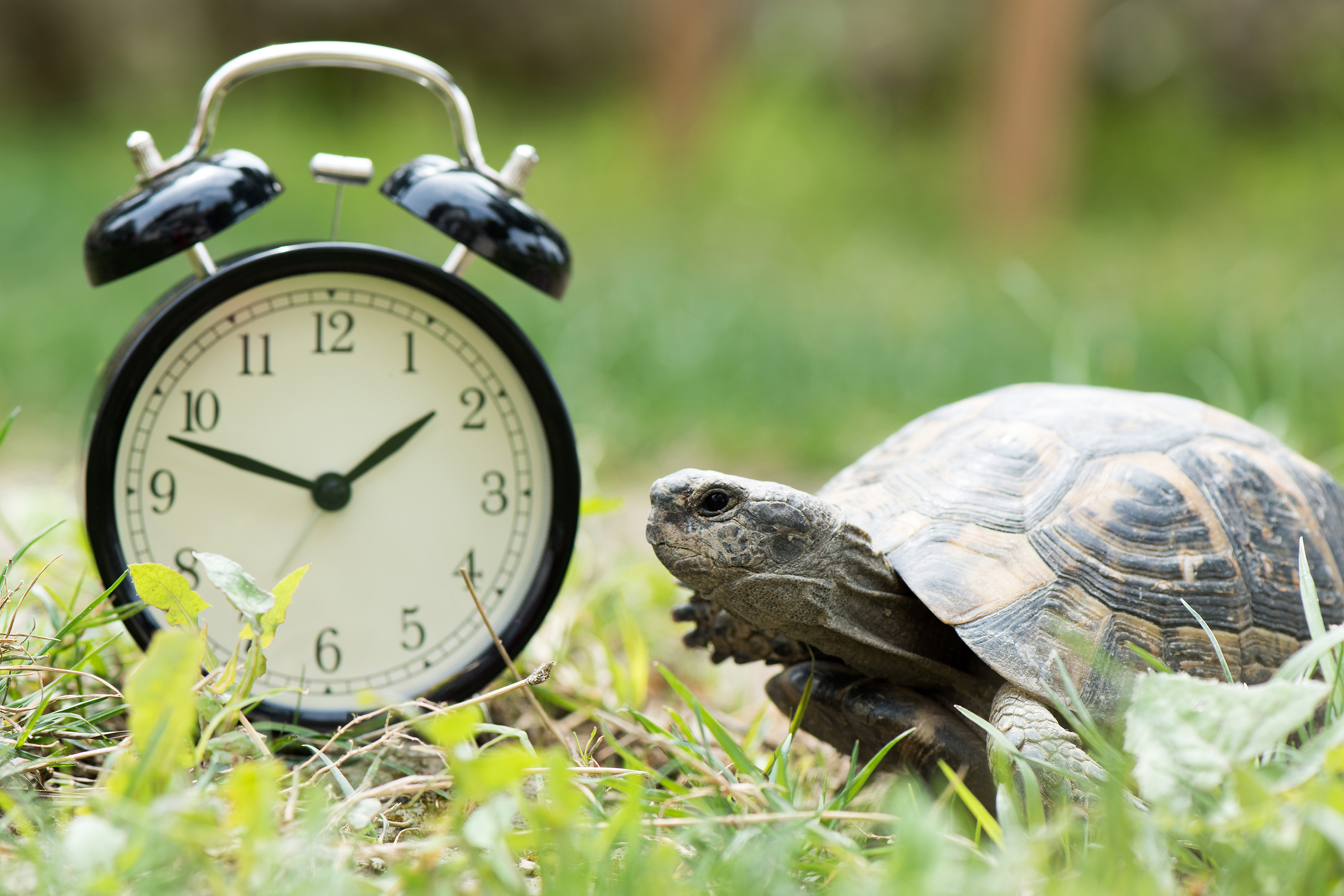 Turtle with clock theme image